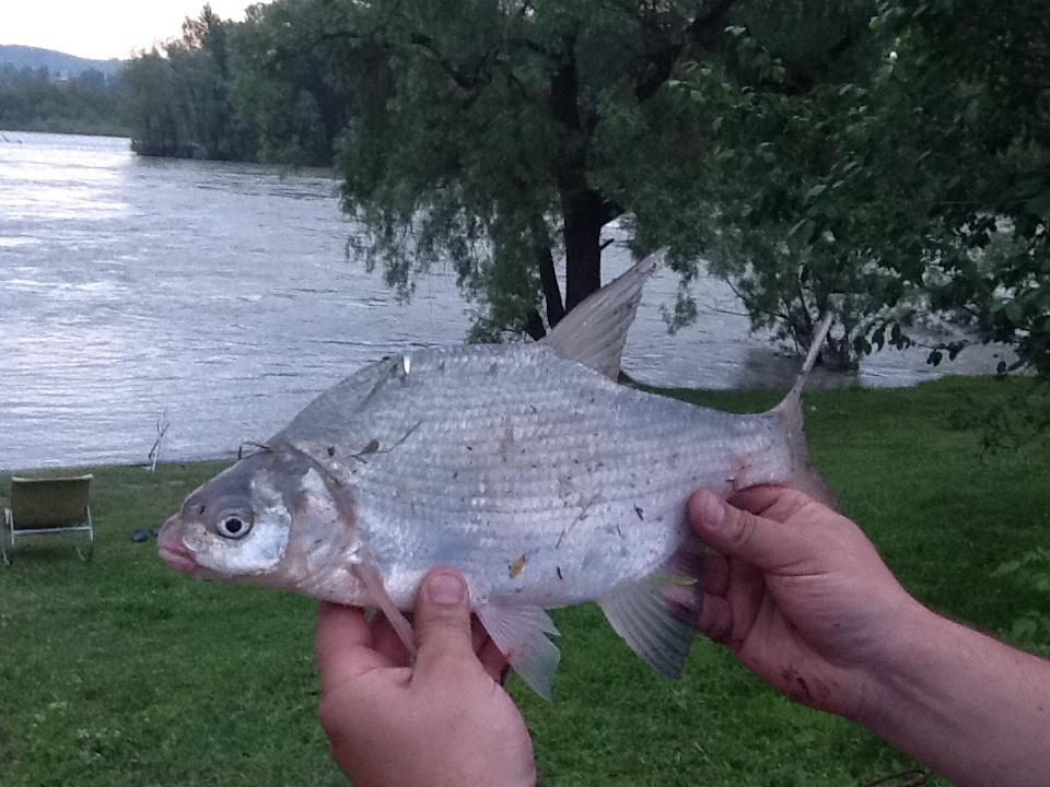 лещ на телецком озере
